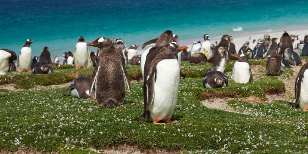 Falklands Museum