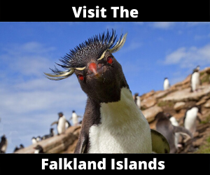 Visit the Falkland islands