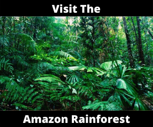 visit the amazon rainforest