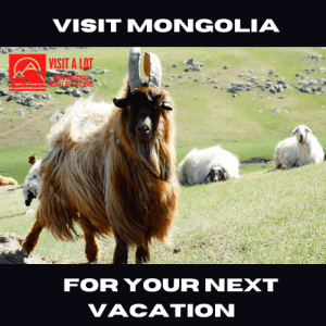 Visit Mongolia for your next vacation