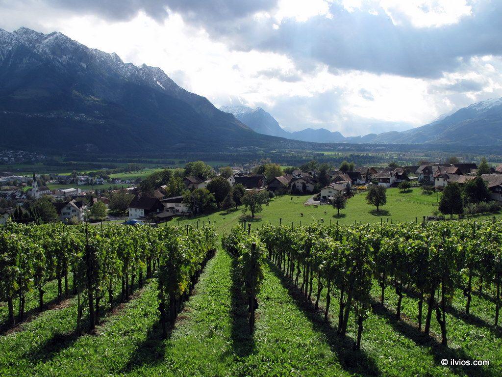 Liechtenstein Winery